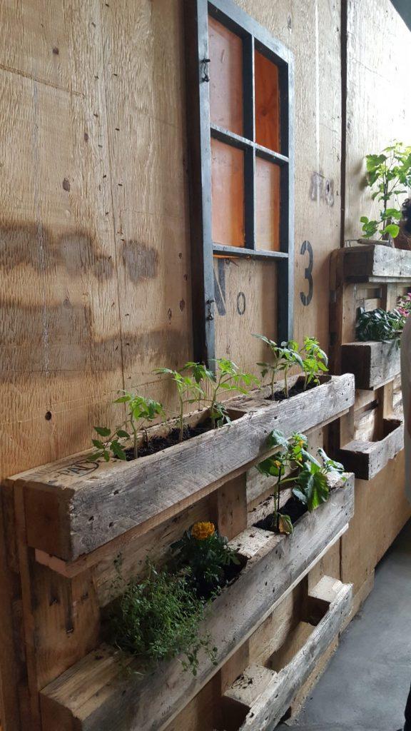 Bühne - Pflanzen